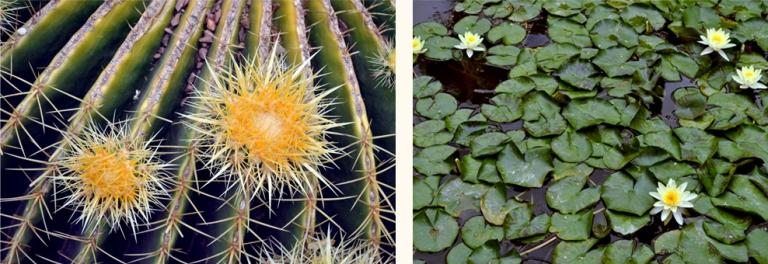Jardin Majorelle, Marrakech, Maroc