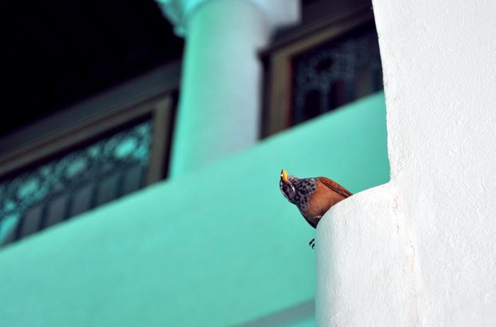 Petit oiseau, Marrakech